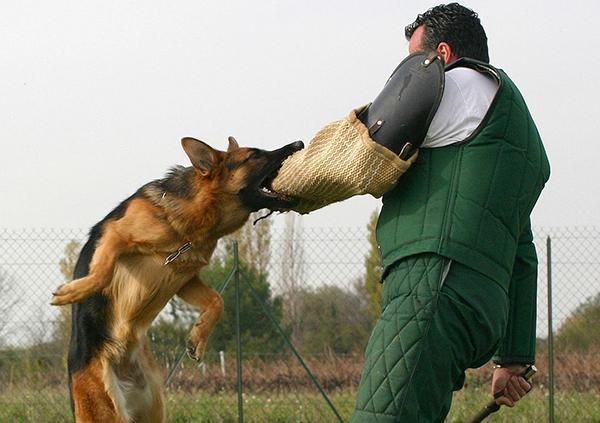 После произнесения команды «Фас!» пес должен атаковать объект