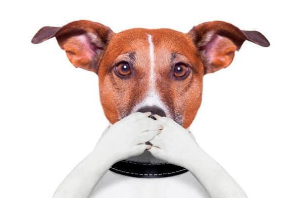 Обучите собаку команде «Тихо!»
