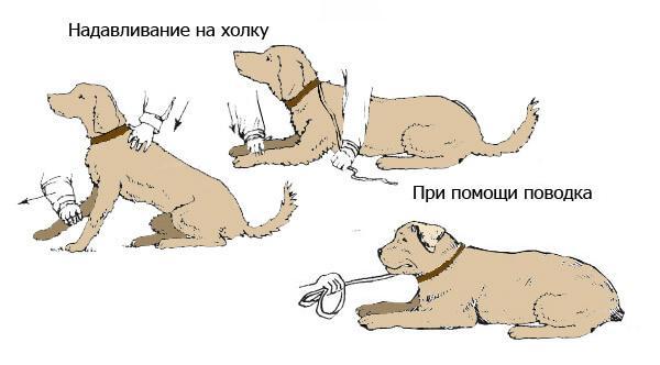 Можно научить собаку команде надавливая на холку или при помощи поводка