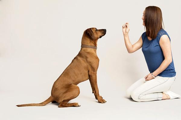 Во время дрессировки давайте лакомства собаке через раз