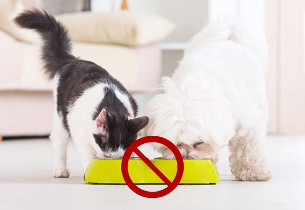 Рекомендуется кормить животных отдельно