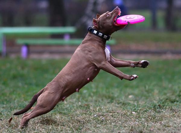 Дрессировка собаки предполагает регулярные тренировки