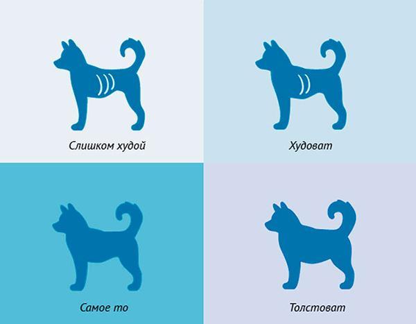 Перед сменой рациона убедитесь, что собака действительно имеет лишний вес