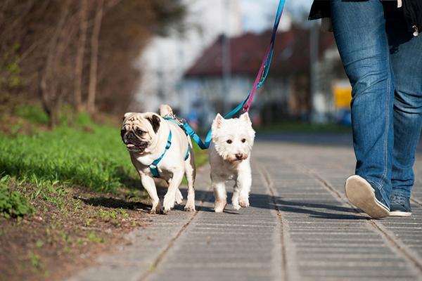 После стерилизации прогулки станут менее тревожными