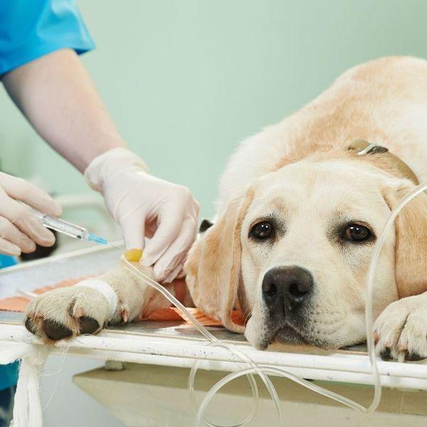 Диагностикой и лечением пса должен заниматься ветеринар