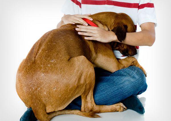 Сильные резкие запахи могут напугать животное