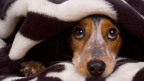 Если пес боится, нельзя его ругать и наказывать