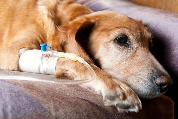 Не занимайтесь лечением собаки в домашних условиях!
