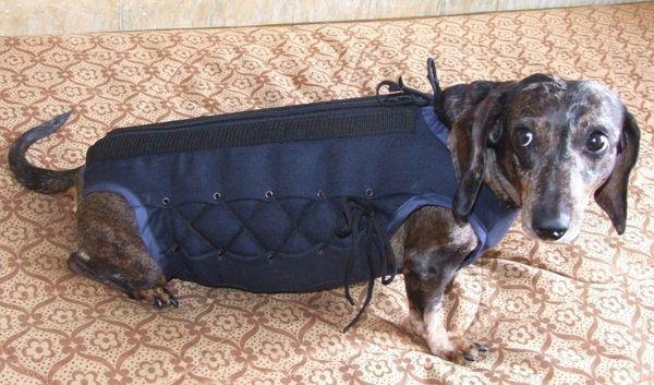 Дископатия у собак – распространенное заболевание позвоночника