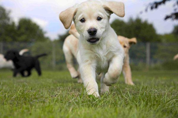 Дрессура маленького щенка начинается из легких команд