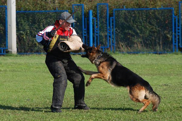 """Обучение собаки команде """"Фас!"""""""