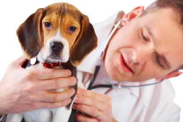 Гастрит у собак – нередкое явление