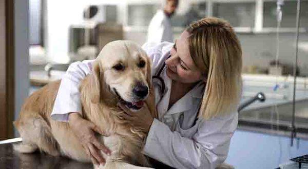 Хронический гастрит у собак встречается чаще