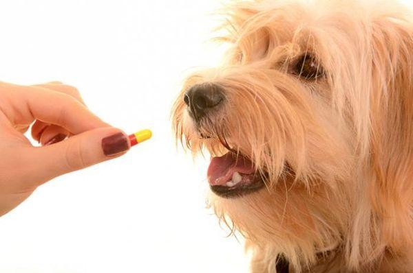 Лечение собаки назначает ветеринар