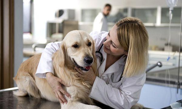 Лечение инсульта у собаки начинается с оказанной первой помощи