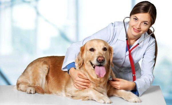 При кашле обязательно покажите собаку ветеринару