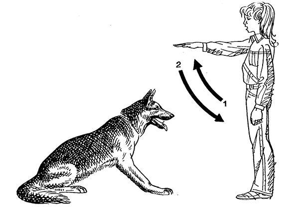 Правую руку поднимаете горизонтально, ладонью вперед (1), и опускаете к правому бедру (2)