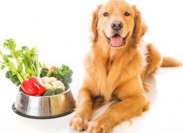 Рацион собаки на 20% из растительных продуктов
