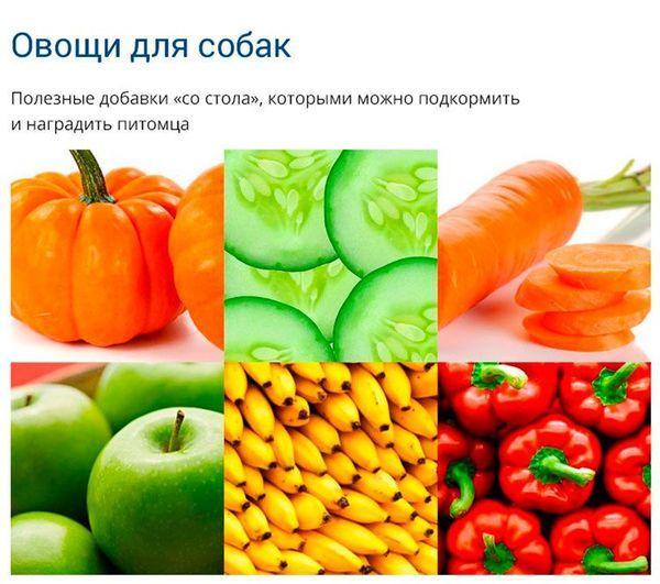 Полезные овощи и фрукты для собаки