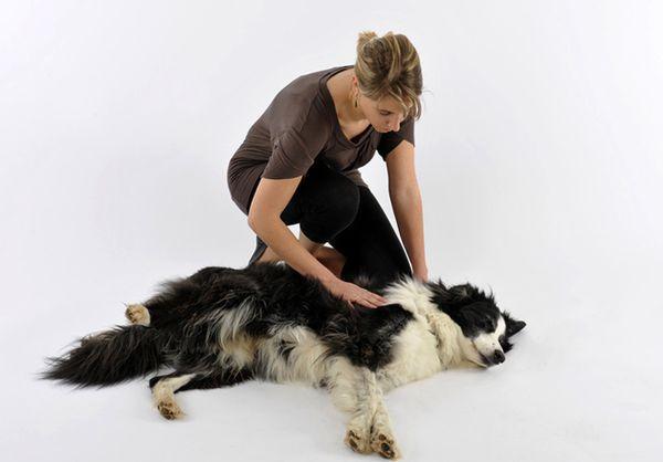 Судороги у пса могут иметь наследственную природу