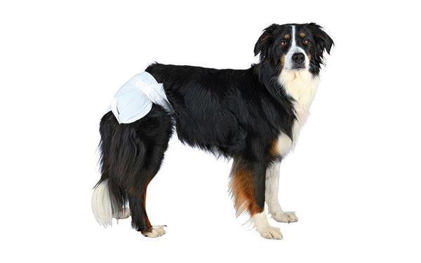 Течка у собаки сопровождается кровяными выделениями
