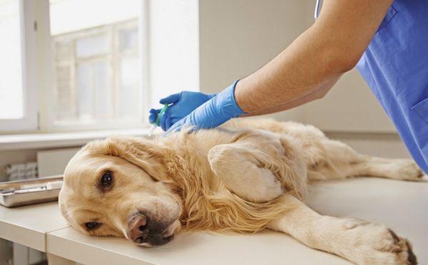 Помочь умирающей собаке нельзя