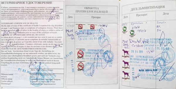 Заполнение ветеринарного паспорта собаки