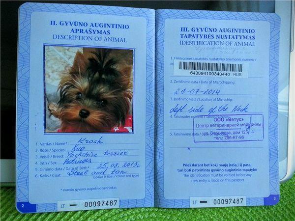Первые страницы международного ветеринарного паспорта для собаки