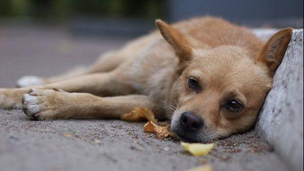 Крысиный яд очень опасен для собак