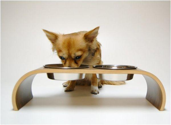 Неправильный рацион пса может привести к урчанию в животе