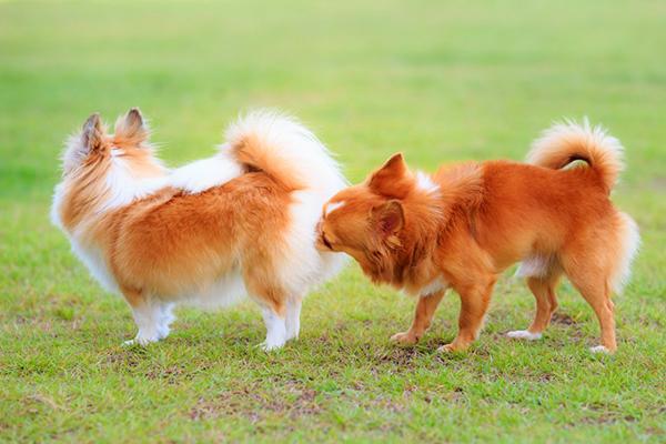 Собака может дрожать под воздействием гормонов
