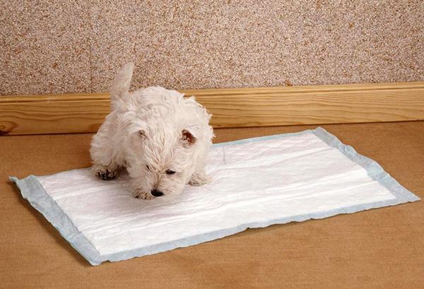 Первая задача - приучить щенка ходить в туалет на пеленку, лоток