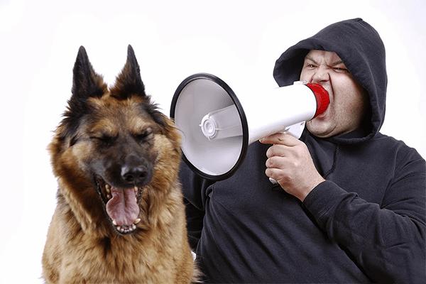 Никогда не повышайте голос на собаку