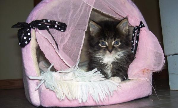 Для котенка можно приготовить специальный домик