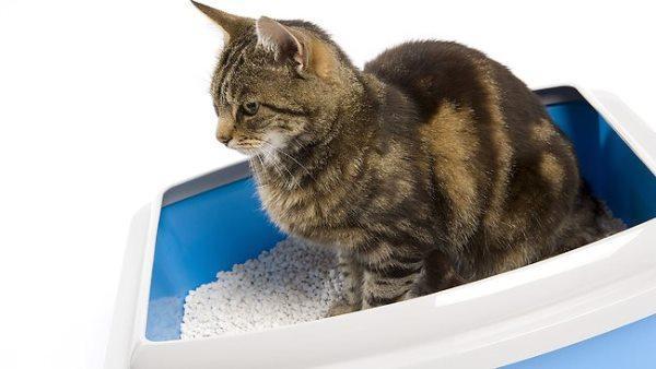 Причиной отказа кошки ходить лоток может быть неприятный запах