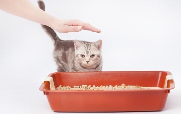 Приучить кота к лотку можно, используя спреи и другие средства