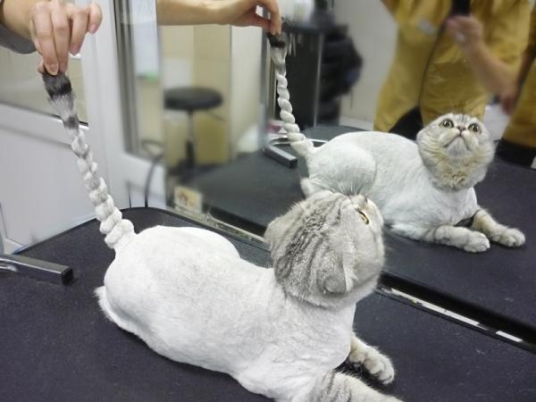 Для стрижки кошки нужно правильно подобрать инструменты