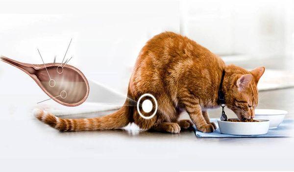 Цистит у кошек – это заболевание мочевыделительной системы