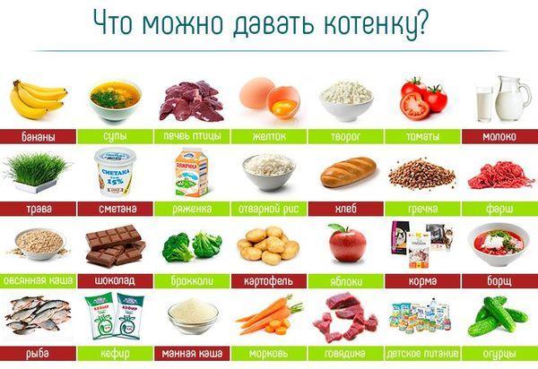 Чем можно кормить котят