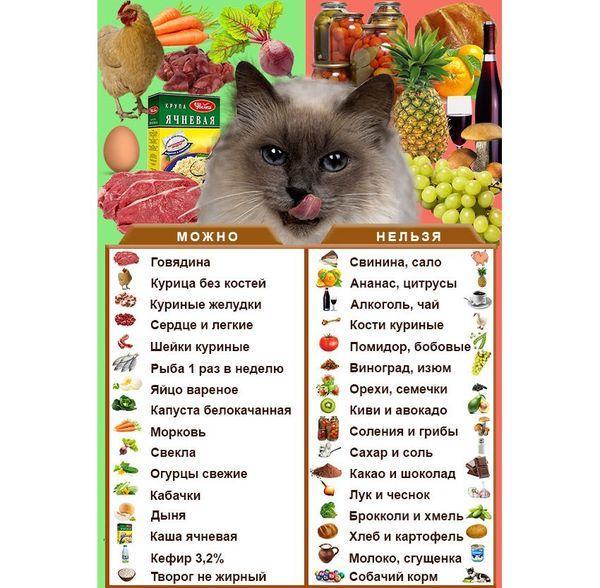 Разрешенные и запрещенные продукты для кошки