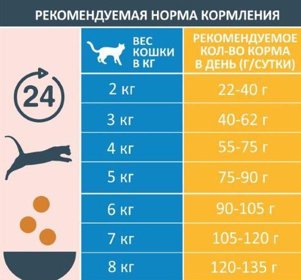 Рекомендуемая норма кормления кошек