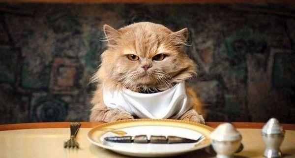 Основным компонентом питания кошки должно быть мясо