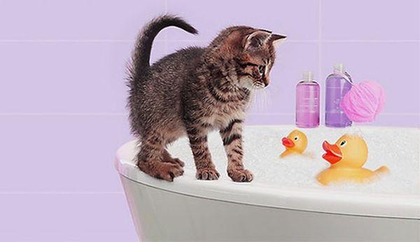 Впервые котенка купают в 3–5 месяцев
