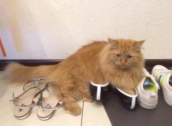 По причине половой зрелости кот может гадить где попало