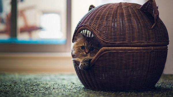 Уютный домик для вашего питомца