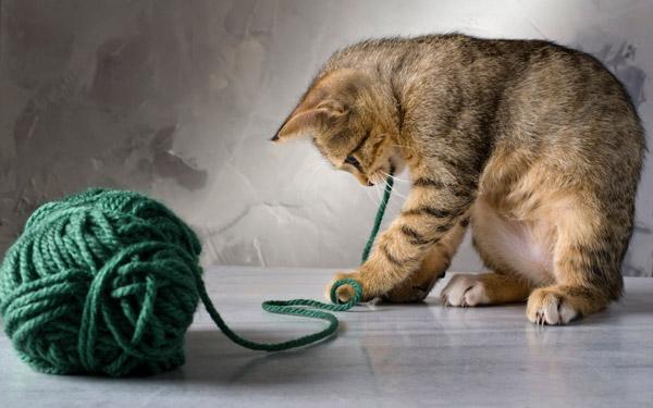 Обычный клубок ниток - безопасная и интересная игрушка для котенка