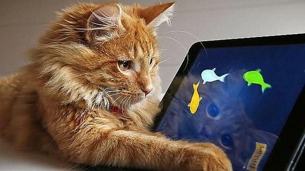 Кот увлечен компьютерной игрой с рыбками