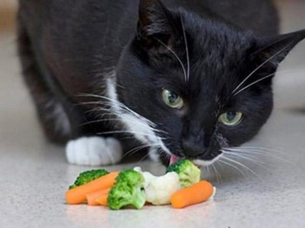 В рационе кастрированных котов должно быть много овощей