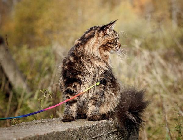 Прогулки на свежем воздухе очень полезны для домашних кошек