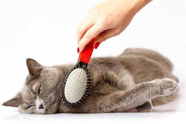 Кошек необходимо регулярно вычесывать